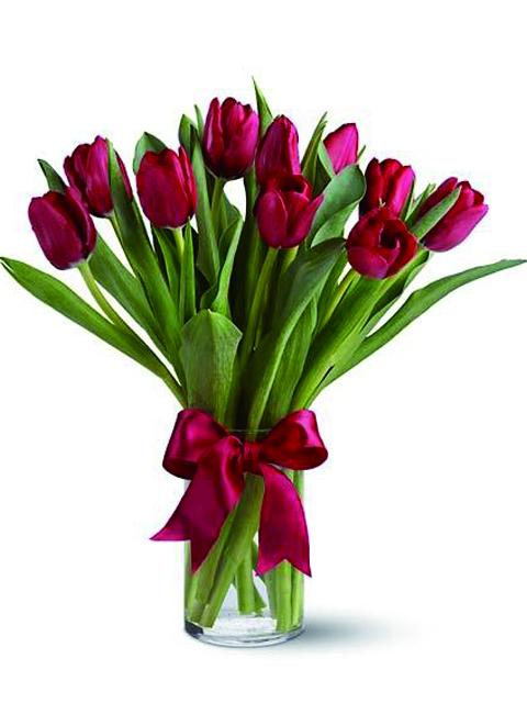 tulipani rossi immagini da