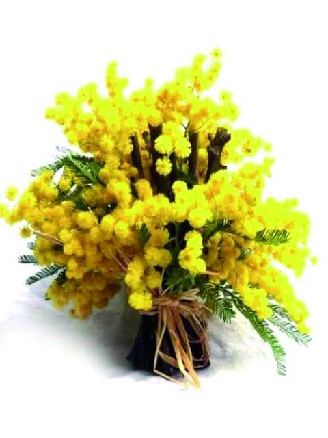bouquet di mimosa