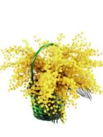 cesto di mimosa
