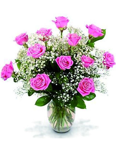 12 rose rosa.