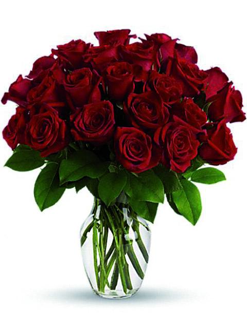 24 rose rosse.