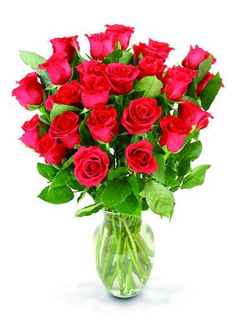 24 Roselline rosse.