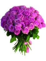 50 Rose rosa.