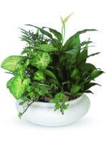 Ciotola di piante miste.