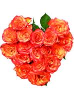 Cuore di rose arancioni.