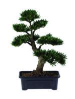 Pianta bonsai.