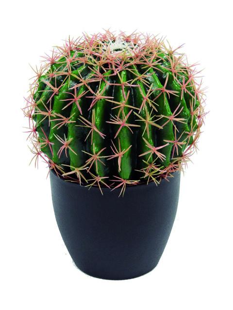 Pianta grassa Bag Cactus.