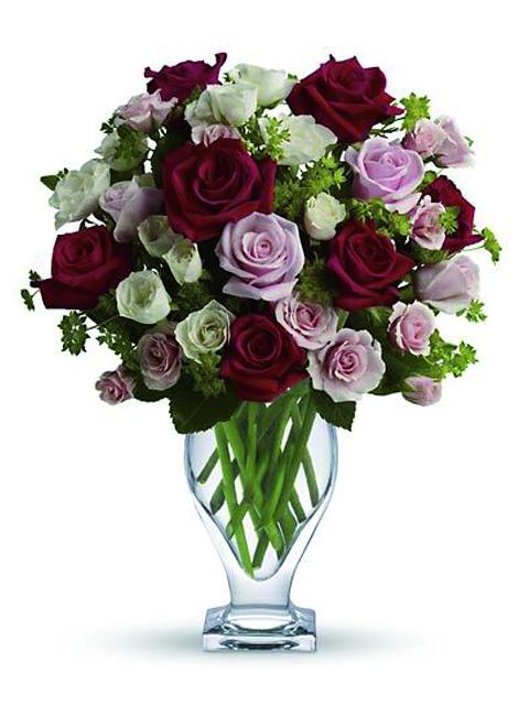 Rose rosa bianche e rosse.