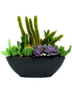 Vaso di piante grasse miste.
