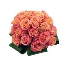 il colore delle rose e il loro significato